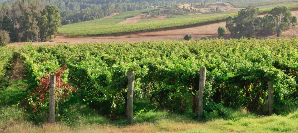 Mullalyup Vineyard
